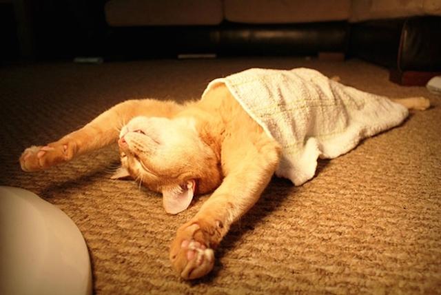 dormir_gato