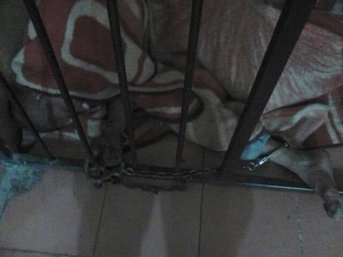encadenado guanajuato 2