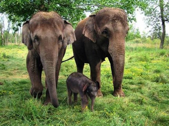 espejo_elefantes