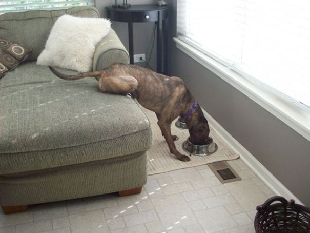 funny-lazy-people-15__605