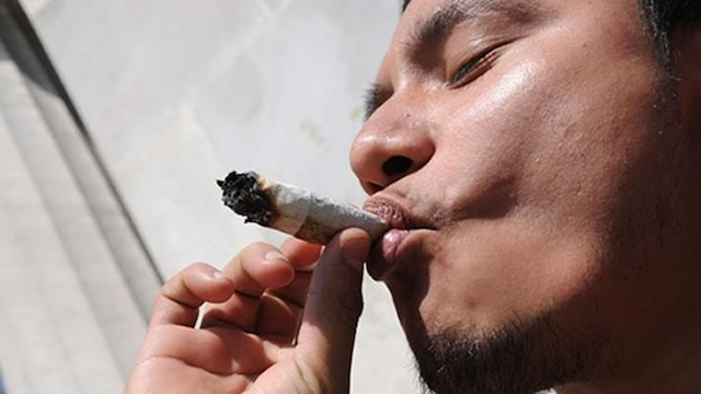 marihuano_erizo