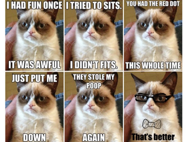 grumpy-cat-has-amassed-tons-of-twitter-followers-and-memes-have-circulated-across-the-web-the-cats-real-name-is-tard