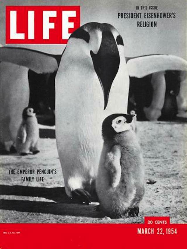 150413-life-animal-covers-16