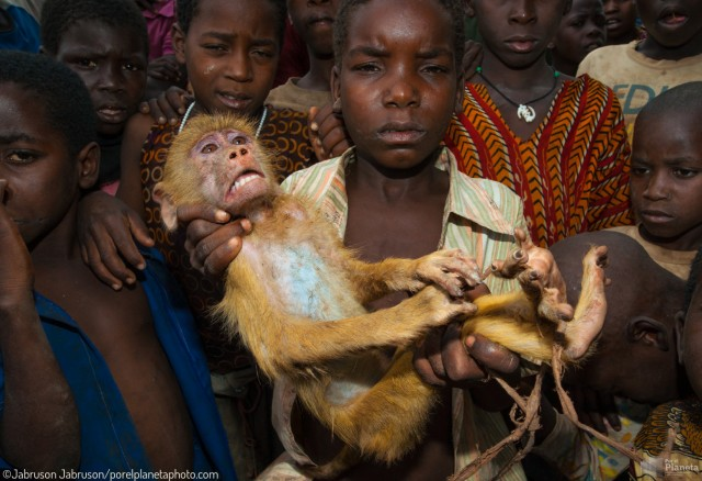 Mozambican children with captive Yellow Baboon