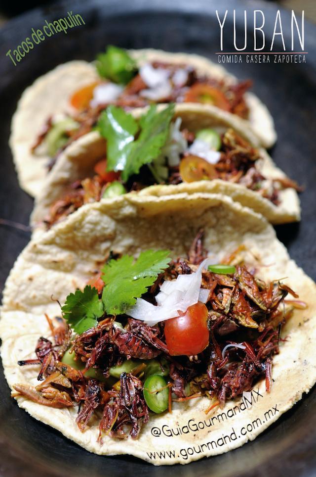 Tacos_de_Chapulines_Yuban2
