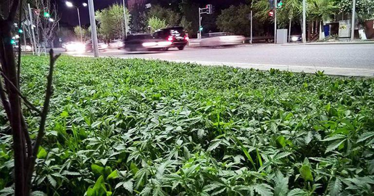 marihuana astana