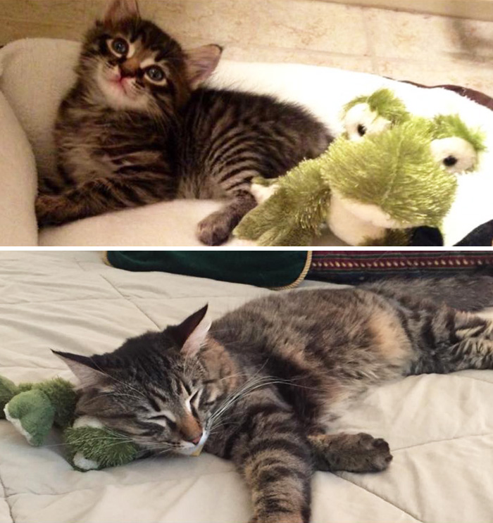 pets-growing-up-with-toys-14__700