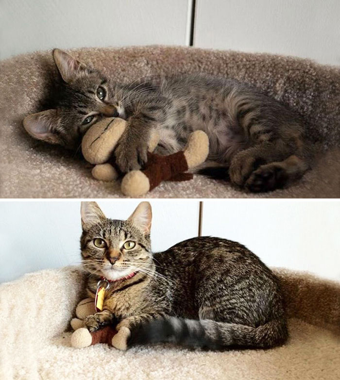 pets-growing-up-with-toys-26__700