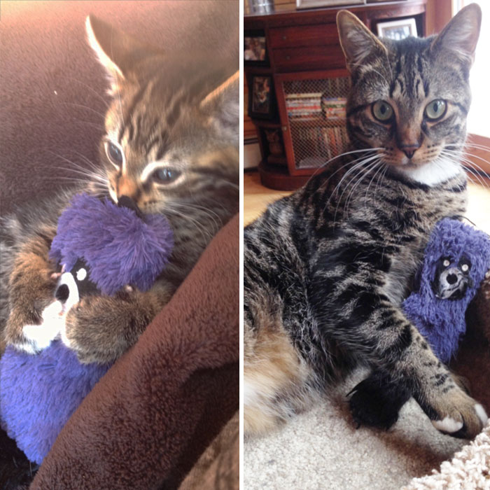 pets-growing-up-with-toys-27__700