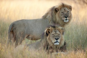 Cecil-and-Jericho_3390407b