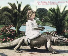 aligatorfarm_2
