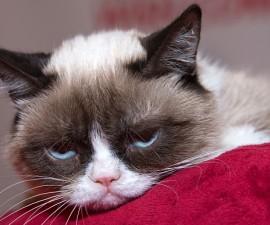 grumpy-cat_3382765b
