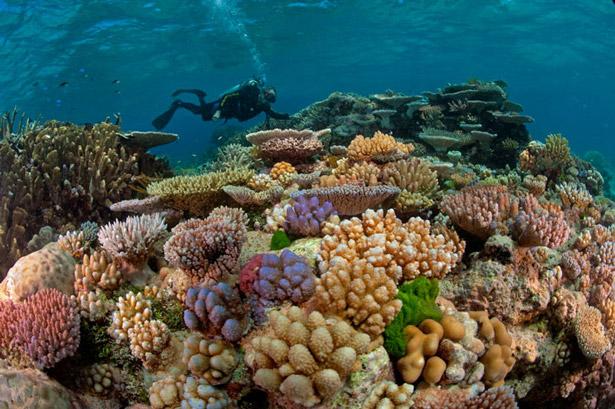 viajes barrera de coral