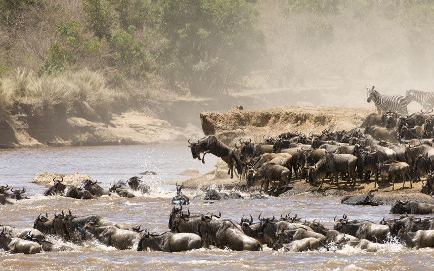 viajes serengeti