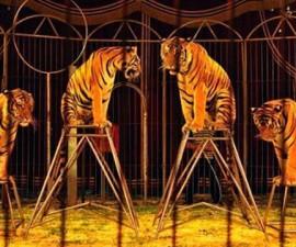 Circo-Animales