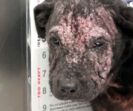 Perro-Enfermo-Rescatado