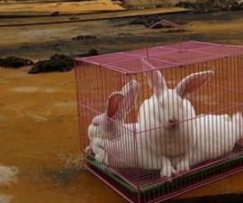 china animales1