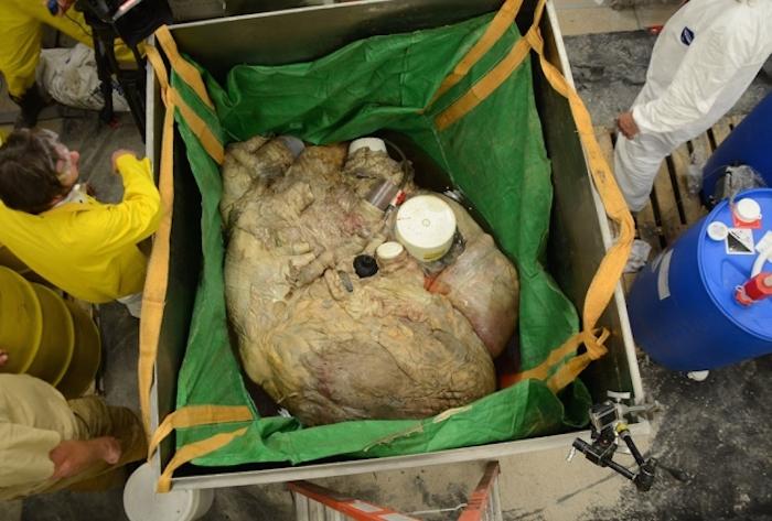 corazónballena1
