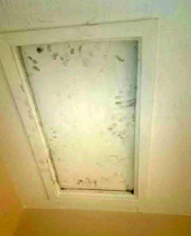 creepy-ex-boyfriend-hides-in-loft (2)