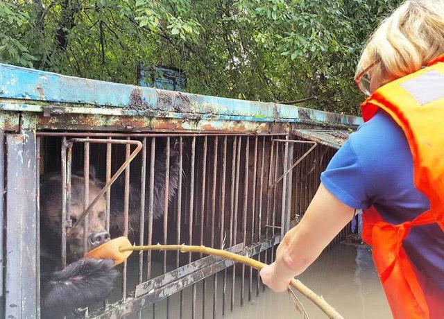 Osos-Inundaciones-Zoologico-Rusia-1