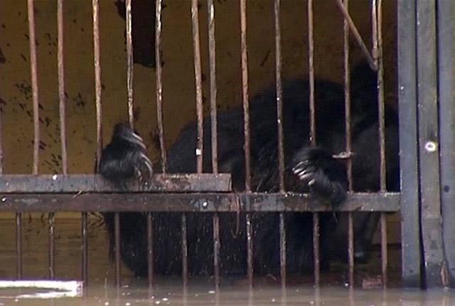 Osos-Inundaciones-Zoologico-Rusia-2