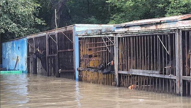 Osos-Inundaciones-Zoologico-Rusia-3