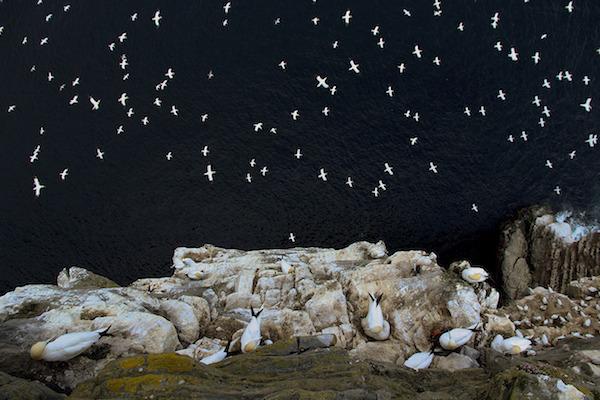"""""""On the Edge"""" de Barrie Williams. Categoría: habitat y máximo ganador de los BWPAs 2015."""