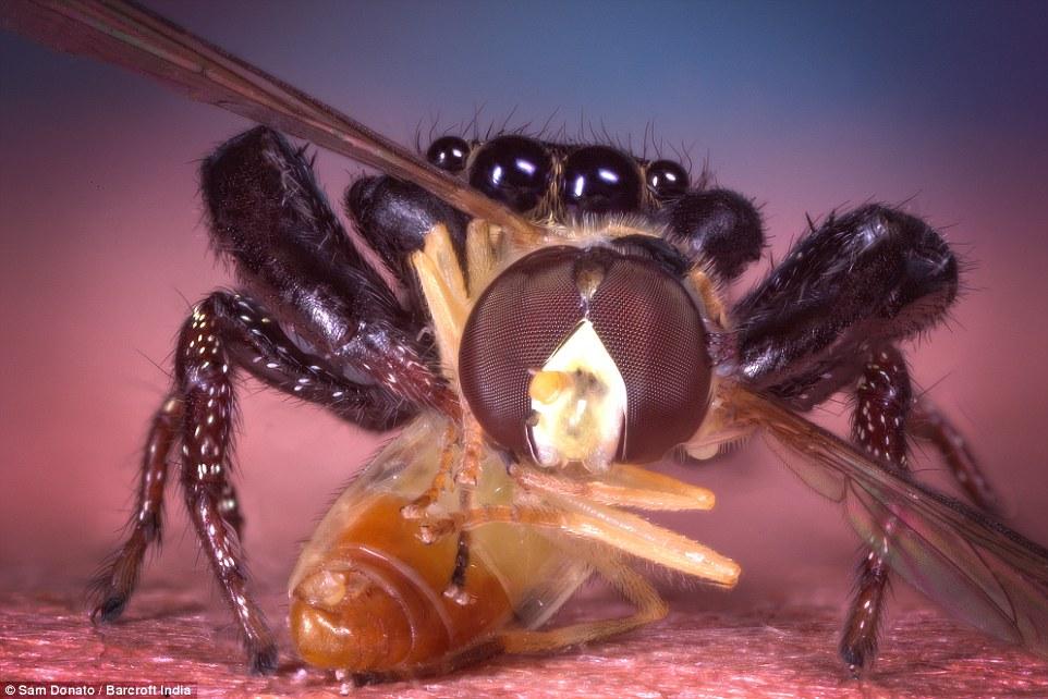 arañas5