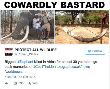 elefante simbabwe