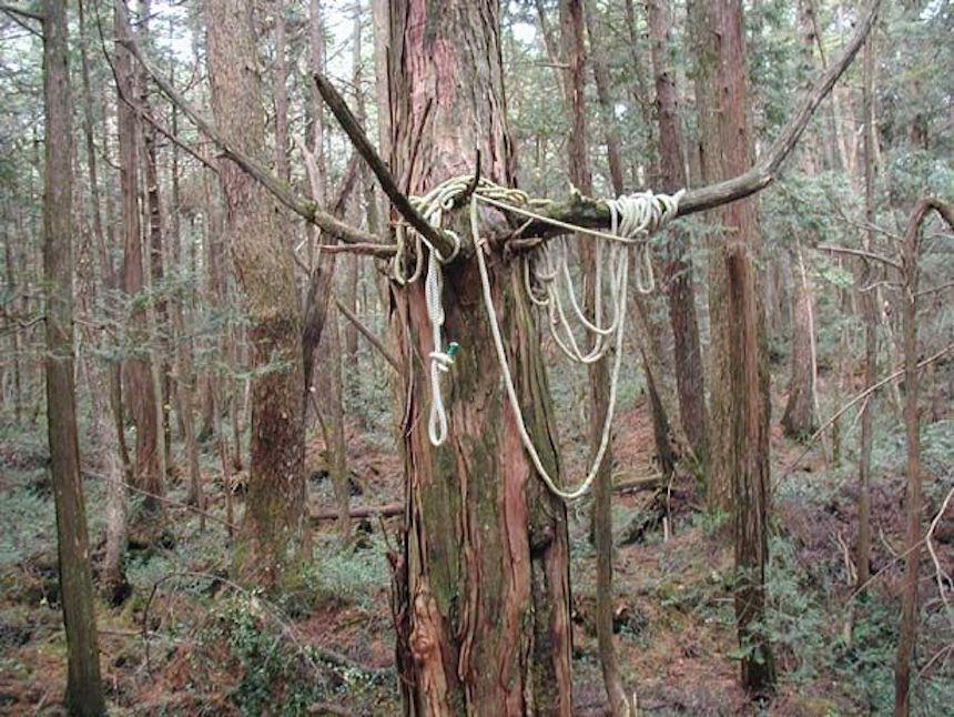 Aokigahara el bosque de los suicidios