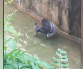 gorila-cincinnati