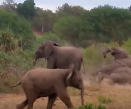 elefante-fail-1