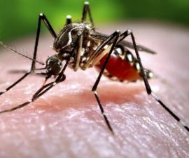 tv-mosquitos-1