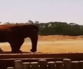 elefante_marruecos_