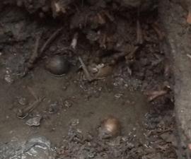 excavacion-centro-historico-craneos-cfe-cdmx