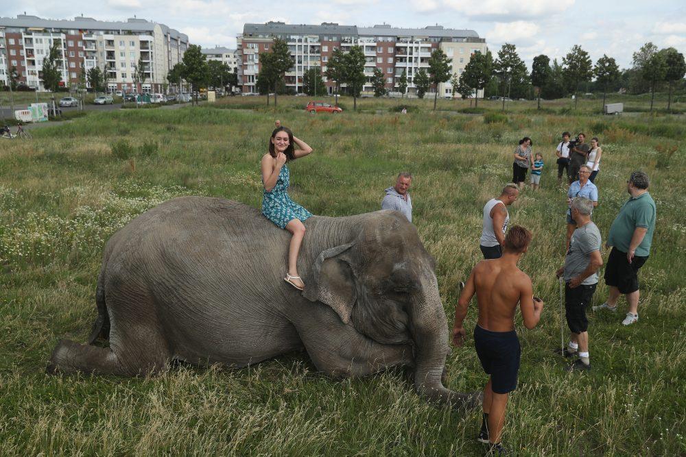 elefante-ley-animales-circos
