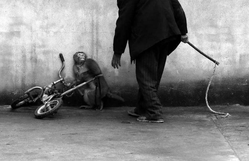 Fotografía por: Yongzhi Chu