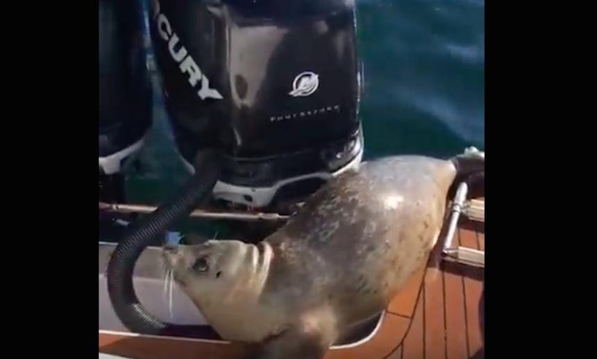Foca salta a un bote para ponerse a salvo