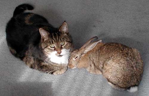 gatos-conejos