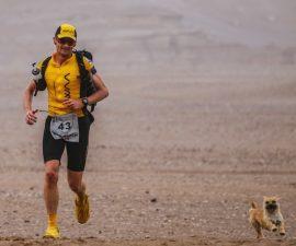 gobi-maraton-perrita