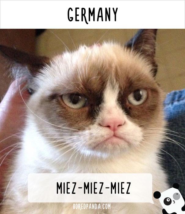 llamado-gatos-alemania