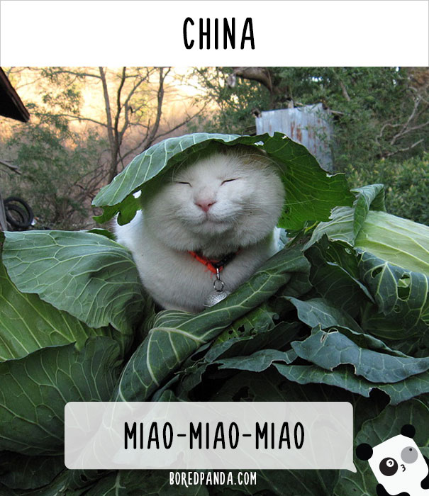 llamado-gatos-china