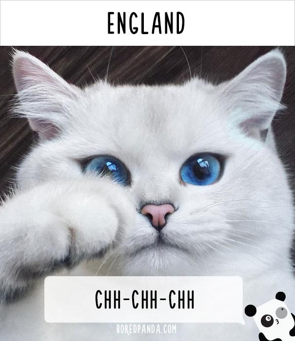 llamado-gatos-inglaterra