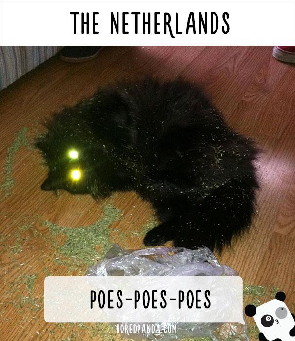 llamado-gatos-paises-bajos
