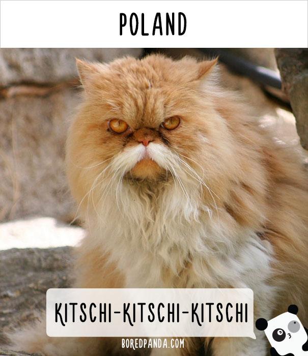 llamado-gatos-polonia