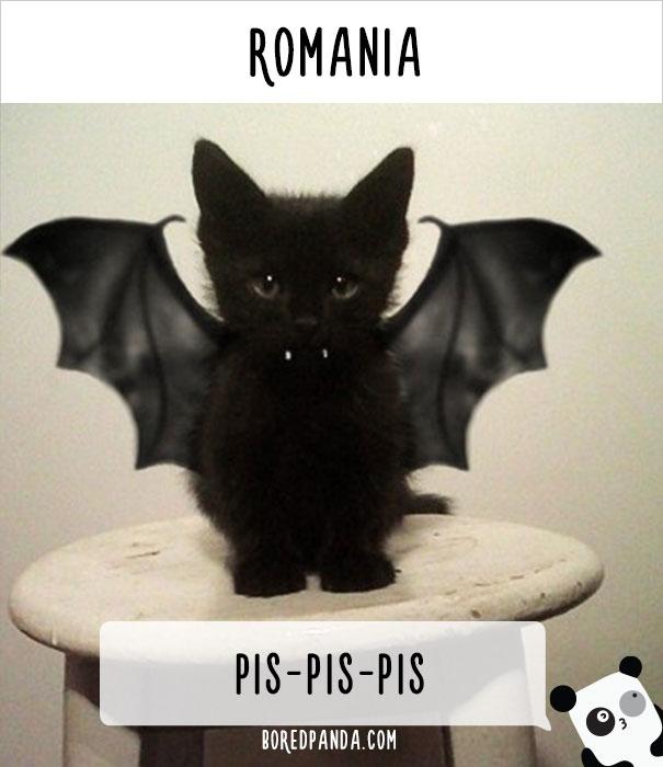 llamado-gatos-rumania