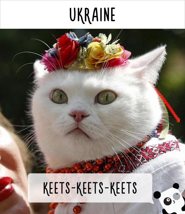 llamado-gatos-ucrania