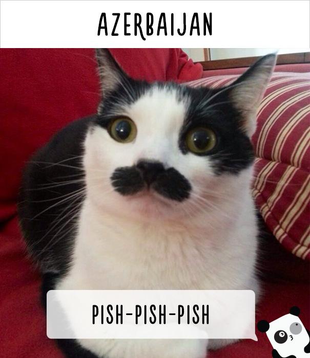 llamados-gatos-azerbaiyan