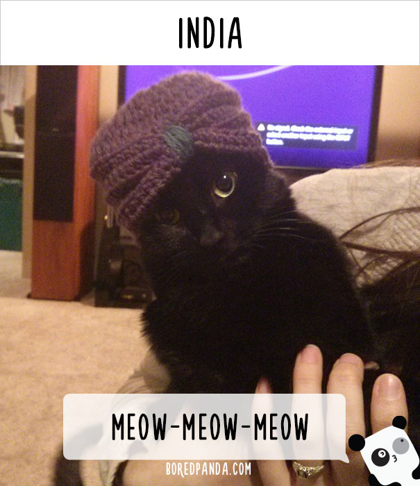 llamados-gatos-india