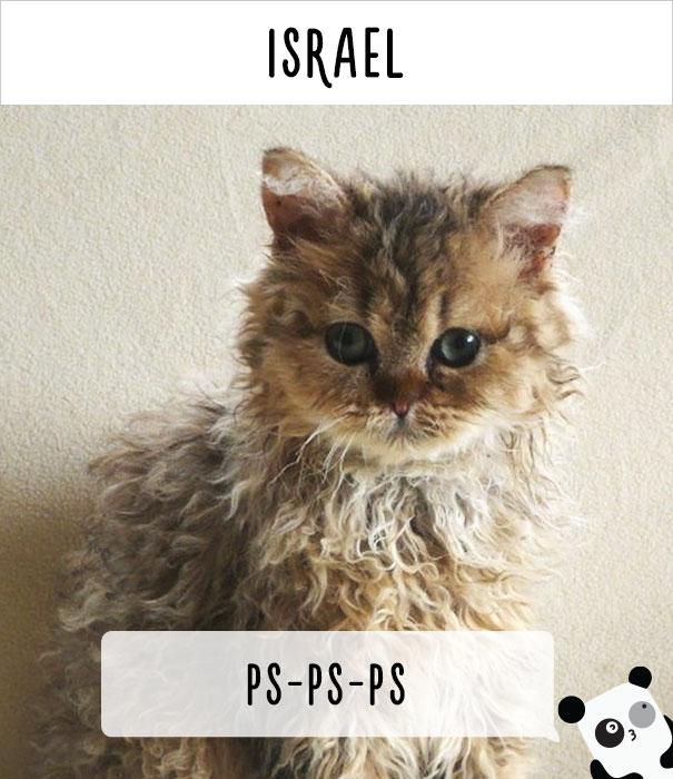 llamados-gatos-israel